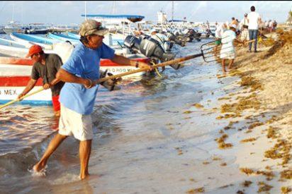 """El """"sargazo"""" amenaza al turismo en el Caribe"""