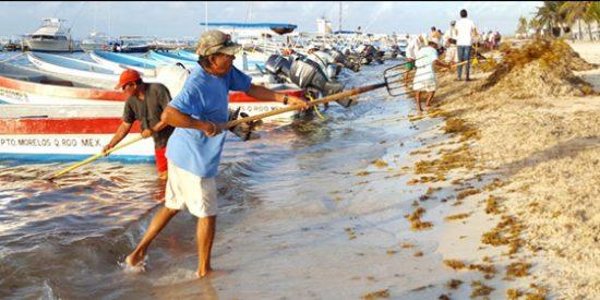 Sargazo: El gran enemigo del turismo en el Caribe mexicano