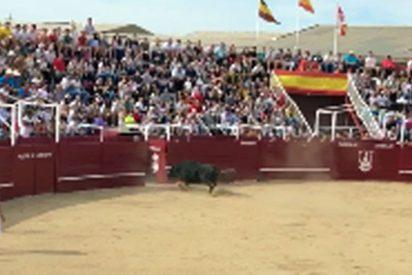 Vídeo: Cierra mal la puerta y el toro lo mata ante la mirada de pánico del público