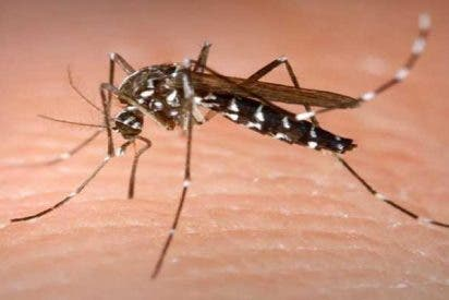 Científicos consiguen eliminar al mosquito tigre de unas islas Chinas