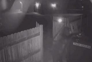 Un oso les mueve de sitio los contenedores de basura a los empleados de una tienda