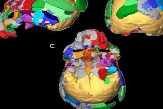 Descubren unos fósiles en Grecia podrían cambiar todo lo que sabemos sobre el homo sapiens