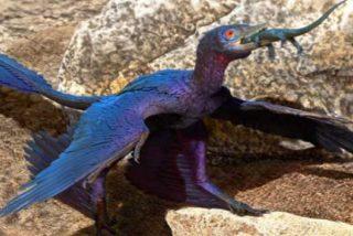 Descubren una especie de lagarto desconocido en el estómago de un microraptor