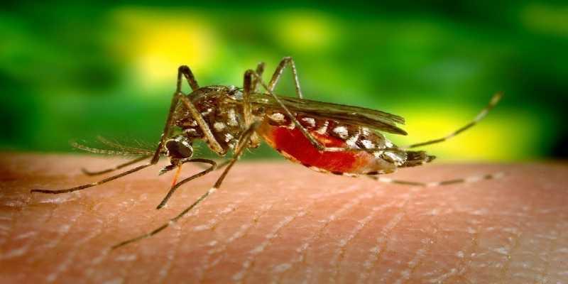 Descubren que un primo cercano del 'botox' es efectivo contra los mosquitos de la malaria