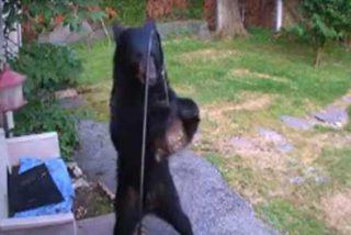 Este oso se cuela en una vivienda en EE.UU. y un perro lo echa
