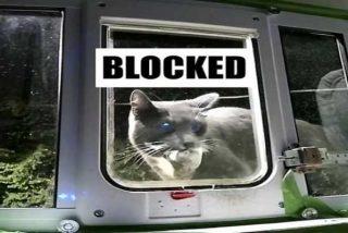 Si tu gato es de los que trae sus presas a casa, este curioso dispositivo se lo impedirá