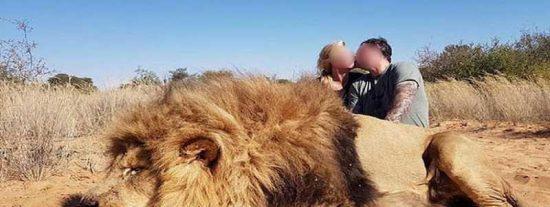Esta pareja caza a un león dormido y se sacan fotos con él dándose besos
