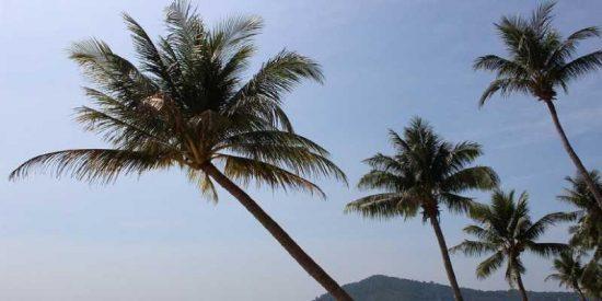 Así es como este usuario de Twitter disfruta de unas vacaciones virtuales en Hawái