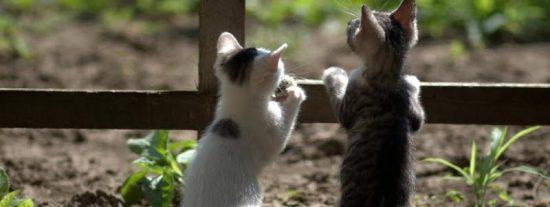 Estos gatitos se hacen virales en las redes al recrear una famosa escena de 'El rey león'