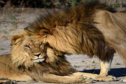 Usan las fotos realizadas por los turistas para controlar la fauna de depredadores