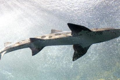 Un hombre prefirió ir a un bar en vez de al hospital tras ser atacado por un tiburón