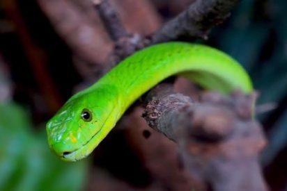 Se despierta con una serpiente en el brazo, en un hotel de Menphis (EE.UU.)