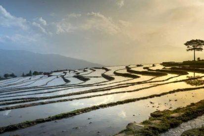 El arroz evitó que la población del Japón desapareciera hace 2.300 años