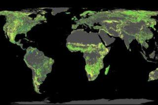 Un terreno equivalente al territorio del Brasil disponible en la Tierra para plantar bosques