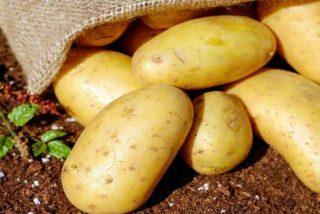 Las variedades de patata europea se han adaptado a los días más fríos y cortos del continente