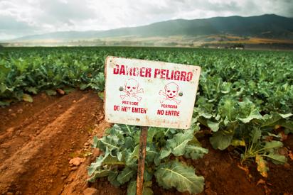Algunos agricultores siguen usando pesticidas que están prohibidos