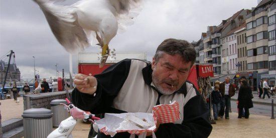 ¿Por qué se han multiplicado los ataques de aves a humanos?