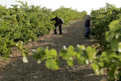 Rutas del Vino en Valladolid.... Ruta de Rueda
