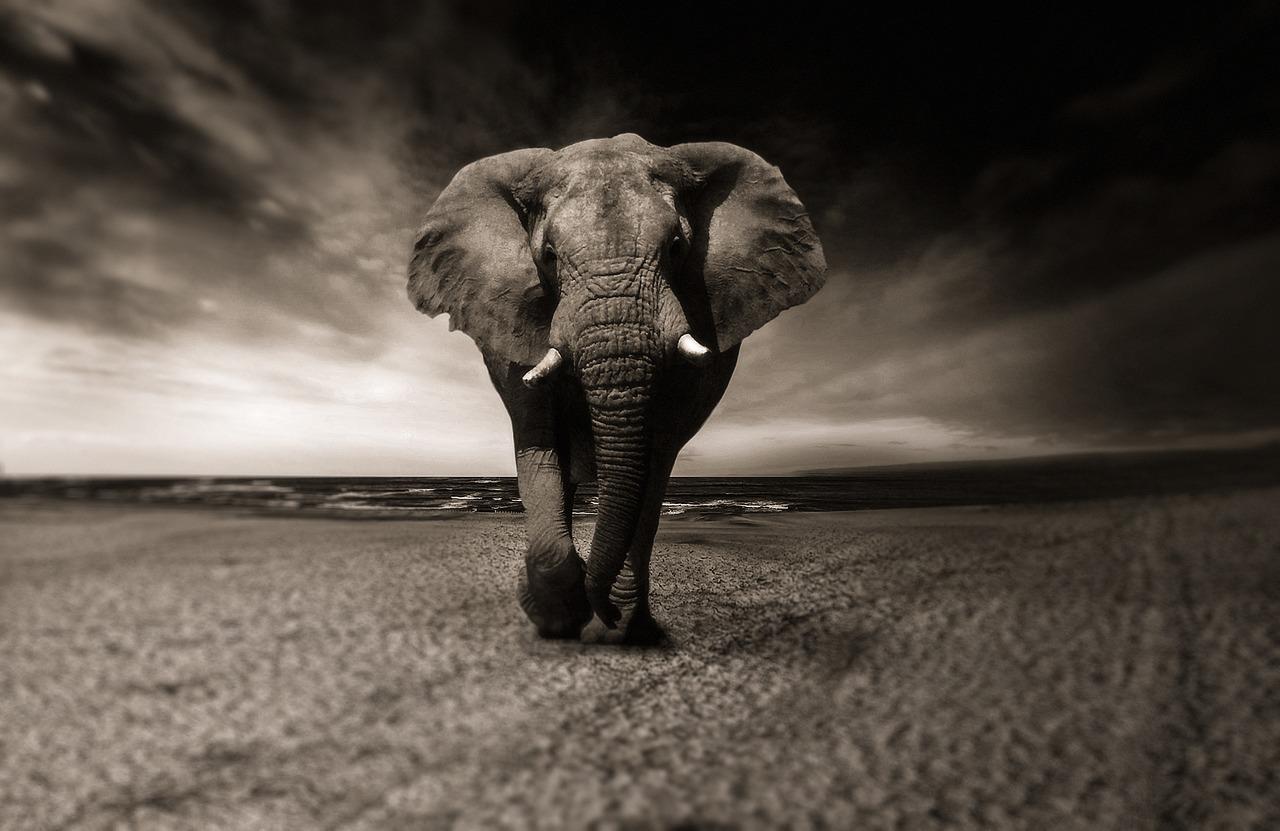 El motivo detrás de la misteriosa muerte de cientos de elefantes en Botsuana