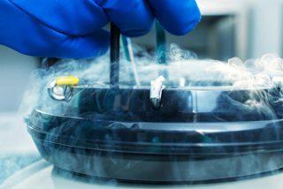 Japón da el visito bueno a la creación de embriones híbridos entre roedores y humanos