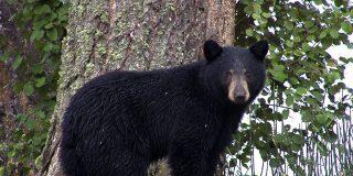 Este oso se cuela en la casa y el perro de la familia lo echa con cajas destempladas
