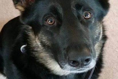 """Un ex magistrado inglés, condenado por matar a su perra a martillazos: """"Me tenía de los nervios"""""""