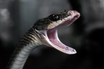Una ciudad de Florida cierra un parque debido a la 'orgía anual de serpientes'