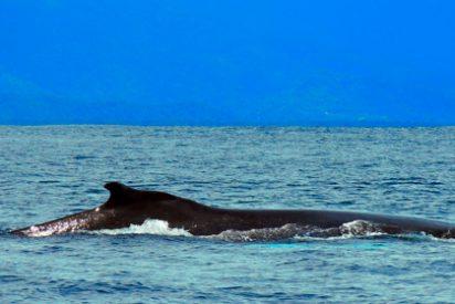 Qué ver en Costa Rica: Festival de Ballenas y Delfines