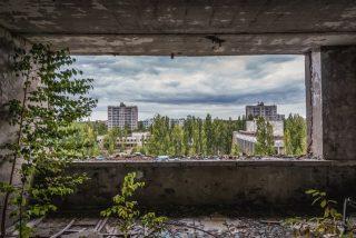 Chernóbil: ¿Por qué las plantas no mueren de cáncer?