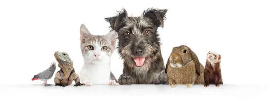 mascotas preferidas por los españoles