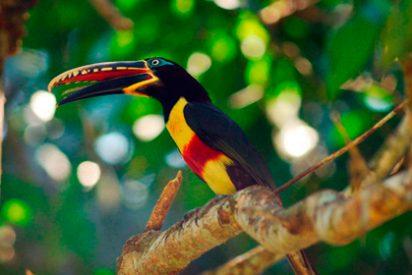 Parque Nacional del Manu: Un paraíso amazónico admirado por el mundo