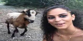 Esta ignorante turista intenta tomarse un selfi con una pobre cabra y sale escaldada