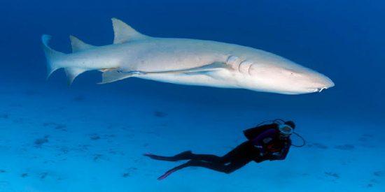 Un avispado buceador inventa sobre la marcha un método para repeler el ataque de un tiburón