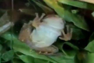 Un paquete de ensalada envasada viene con sorpresa incluida al ocultar en su interior una rana viva