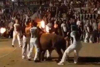 Espectaculares imágenes de un toro con la cornamenta ardiendo durante la celebración de un festejo taurino en Amposta