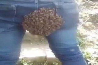"""Un enjambre de abejas invaden """"los cuartos traseros"""" de un joven al confundirlo con su colmena"""