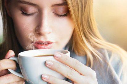 ¿Conoces todas las propiedades del té Matcha?