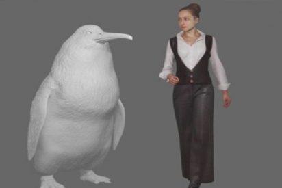 """Así era el """"pingüino monstruo"""" que alcanzaba tamaño humano y vivió hace millones de años en Nueva Zelanda"""