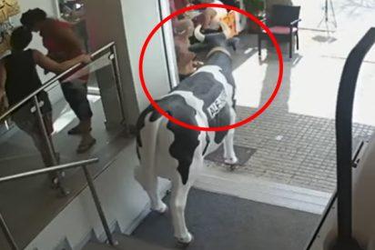 Detienen a este mamarracho por robar la vaca de una tienda Ale-Hop en Mallorca