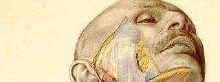 'La anatomía topográfica de Pernkopf': el libro nazi que los cirujanos todavía usan