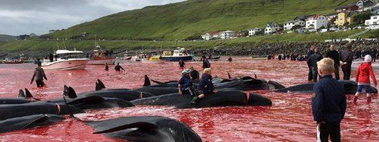 La brutal matanza anual de ballenas en la que participan niños y turistas en las islas Feroe