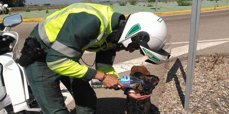 Un Guardia Civil ofrece agua de su botella a un perro moribundo y conmociona las redes y a sus jefes