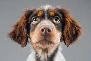 Zamora comenzará a cobrar un impuesto de 9 euros por cada perro censado para pagar los servicios de bienestar animal