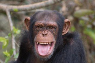 Los monos, la llave para un tratamiento que despierte a pacientes en coma