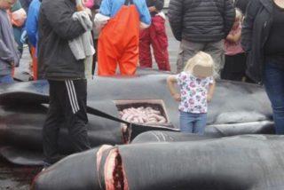 La sucia matanza anual de ballenas en la que participan niños y turistas en las islas Feroe