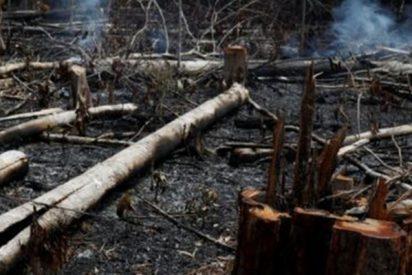 Incendios en el Amazonas: Cómo uno de los lugares más húmedos del mundo no pudo detener el fuego