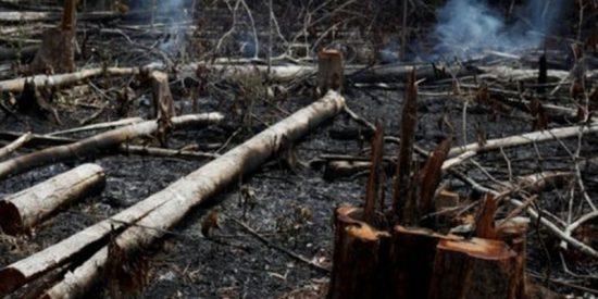 Los incendios en el Amazonas se convirtieron en primera tendencia mundial en Twitter