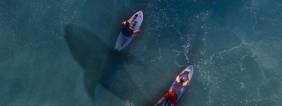 Graban con dron a unos bañistas que surfean vigilados por tiburones blancos y no les avisan del peligro