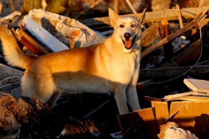 Emotiva despedida de los Bomberos de Alicante a Maya: su agente más querida y especialista en rescates