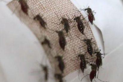 Ropa con grafeno, la novedosa solución contra la picadura de mosquitos